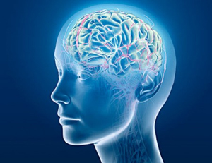 Thumbnail image for Meditation and the Brain